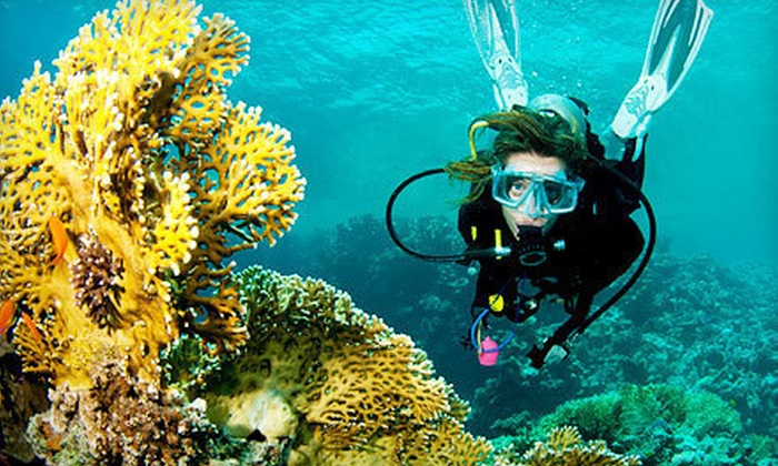 Swim or Dive - Multiple Locations: Introductory Scuba-Diving Experience for One, Two, or Three at Swim or Dive (Up to 53% Off)