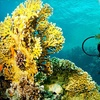 Up to 53% Off Intro to Scuba for 1, 2, or 3