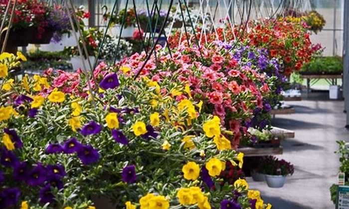 Frey's Greenhouse - North Cornwall: $10 for $25 Worth of Plants and Garden Supplies at Frey's Greenhouse