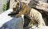 The Zoo in Forest Park and Education Center - The Zoo in Forest Park and Education Center: Zoo Visit for Two, Four, or Six at The Zoo in Forest Park and Education Center (Up to 50% Off)