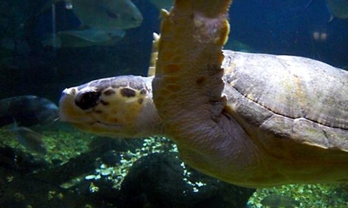 Atlantic City Aquarium - Atlantic City: $8 for Two Admission Tickets to Atlantic City Aquarium (Up to $16 Value)