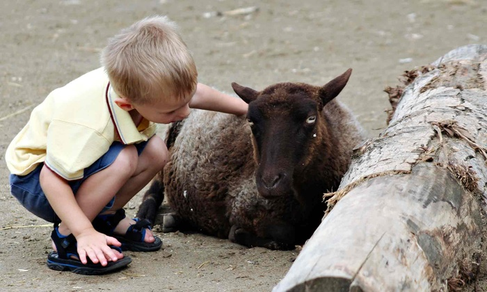 Maplewood Farm - North Vancouver - Maplewood: C$10 for a Family Outing for Up to Two Adults and Two Children at Maplewood Farm (Up to C$24 Value)
