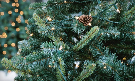 Pick & Cut Your Own 6- to 8-Foot Douglas Fir Christmas Tree (a $38 value) - Plow Farms in Mohnton