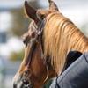 Half Off Horseback Trail Ride in Dearborn