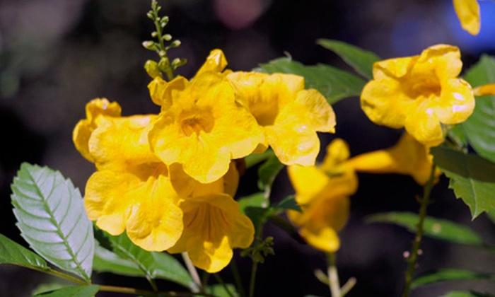 PlantEscape Gardens - Dawson: $10 for $20 Worth of Plants and Gardening Supplies at PlantEscape Gardens
