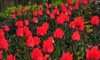 "Coastal Maine Botanical Gardens - Boothbay: $35 for Admission to ""Tastefully Maine"" Midsummer Market Preview at Coastal Maine Botanical Gardens in Boothbay ($75 Value)"