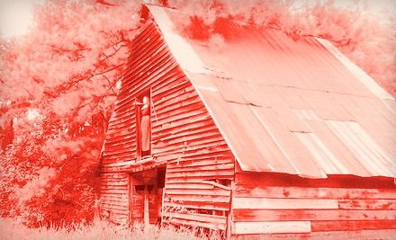 1 Ticket (a $15 value) - Haunted Forest at Panic Point in Youngsville