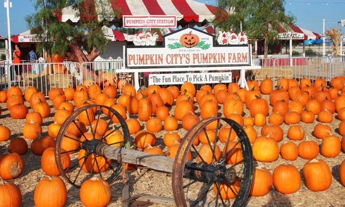 Pumpkin City's Pumpkin Farm - Pumpkin City's Pumpkin Farm : $39.99 for Fun Pass with Rides, Petting Zoo & Pumpkin Credit at Pumpkin City's Pumpkin Farm ($66 Value)