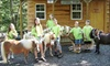Land of Little Horses Farm Park - OLD ACCOUNT - Gettysburg: $13 for Two Tickets to Land of Little Horses Farm Park in Gettysburg (Up to $27.90 Value)