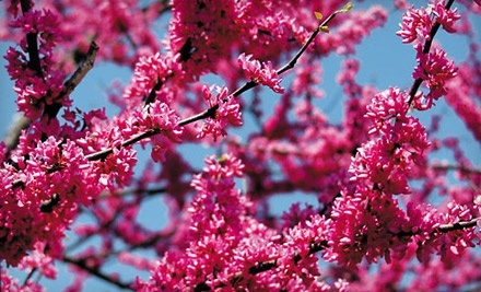 Wayside Gardens: $50 Groupon - Wayside Gardens in