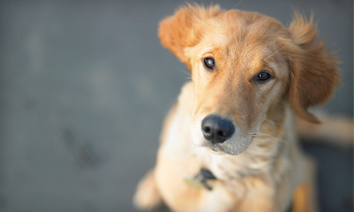 Clean and Healthy Pets: $10 for $20 Worth of Pet Toys, Food, and Accessories from Clean and Healthy Pets