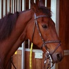 Up to 55% Basic Horseback-Riding Lessons in Pembroke