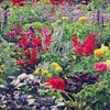 $10 for Plants, Flowers, and Gardening Supplies