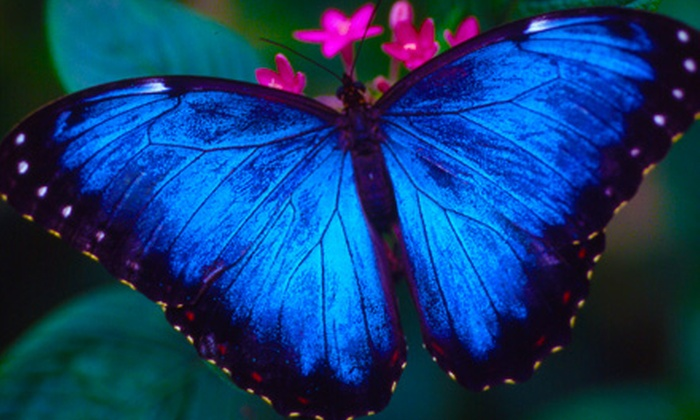 Houston Museum of Natural Science - The Museum District: $14 for a Visit for Four to the Cockrell Butterfly Center at the Houston Museum of Natural Science ($32 Value)