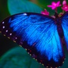 Cockrell Butterfly Center – 56% Off Tickets