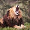 Up to58% Off Drive-Through Wildlife Safari