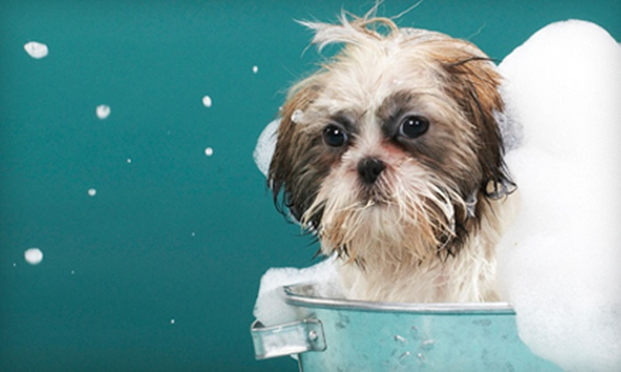 Groomingdales of Columbia - Melrose Heights/Heathwood: Dog Bath or Dog Grooming for a Small, Medium, or Large Dog at Groomingdales of Columbia (Up to 70% Off)