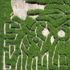 Half Off Family Corn-Maze Outing for Four