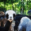 Up to 46% Off a Farm Tour and Picnic