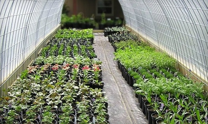 Sands Nursery - Rockford: $20 for $40 Worth of Plants and Shrubs at Sands Nursery in Machesney Park