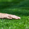 61% Off Lawn Aeration from Kentucky Lawn Care