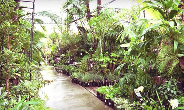 Burkard Nurseries - Pasadena: $25 for $50 Worth of Plants and Gardening Supplies at Burkard Nurseries