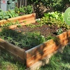 $10 Donation to Garden Plot for Low-Income Family