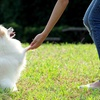 97% Off Online Animal-Training and Pet-Sitting Course