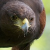 Up to 51% Off at West Coast Falconry
