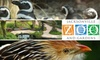 Jacksonville Zoo and Gardens - Imeson Park: $6 for Jacksonville Zoo and Gardens Admission