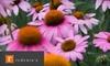 Redenta's Garden - Multiple Locations: $15 for $30 Worth of Gardening Supplies at Redenta's Garden