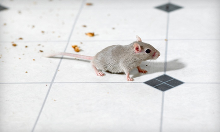 Optimal Pest Solutions - Multiple Locations: $30 for a Residential Pest-Control Treatment from Optimal Pest Solutions ($75 Value)