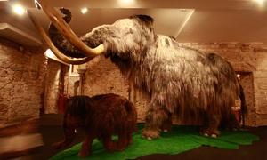 Museo del Mamut: Entrada al Museo del Mamut para 2 adultos por 9 € y con 1 o 2 niños desde 11 €