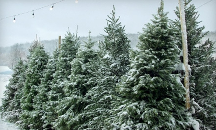 Elite Christmas Trees - El Paso: $28 for a Seven-Foot Douglas-Fir Christmas Tree ($56 Value) or a $56 Gift Card at Elite Christmas Trees