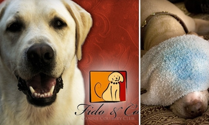Fido & Co. - Hillcrest: $25 for $60 Worth of a Variety of Dog Services at Fido & Co.