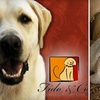 Fido and Company - Hillcrest: $25 for $60 Worth of a Variety of Dog Services at Fido & Co.