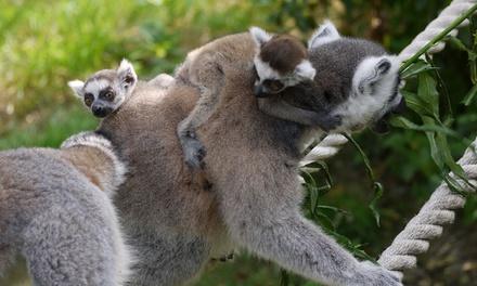 Lincolnshire Wildlife Park