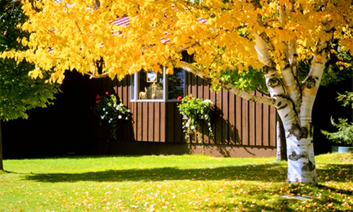 Gray Tree Service - Chicago: $99 for $200 Worth of Tree Services from Gray Tree Service