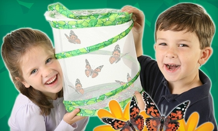 Insect Lore: Butterfly Garden with Live Caterpillars or Insects and Accessories from Insect Lore