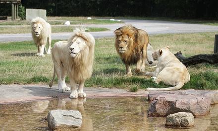1 Ticket für den Safaripark