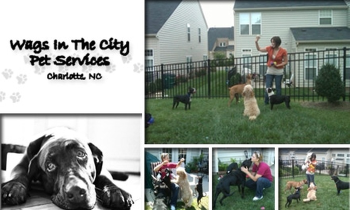 Wags in the City - Charlotte: $15 for $40 Worth of Pet Services From Wags in the City