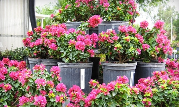 Bayshore Garden Center - North Fort Myers: $15 for $30 Worth of Plants and Garden Supplies at Bayshore Garden Center