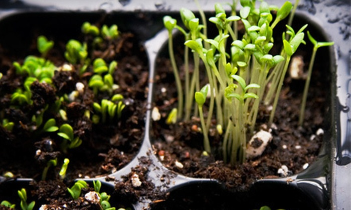 New England Hydroponics - Rock Valley: $20 for $40 Worth of Hydroponic Gardening Tools and Supplies at New England Hydroponics in Southampton
