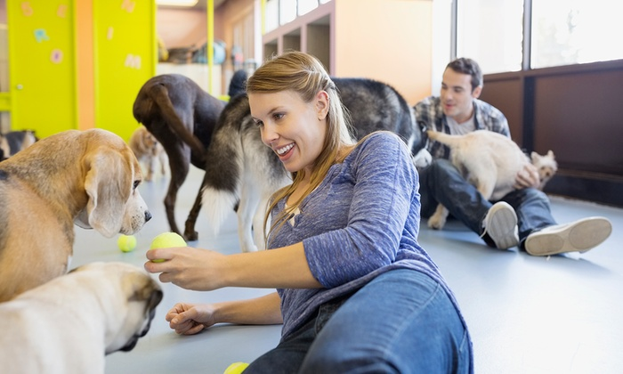 Precious Paws - Fishers: One, Three or 10 Days of Pet Day Care Valid for Dogs Under 40 Pounds at Precious Paws (Up to 75% Off)