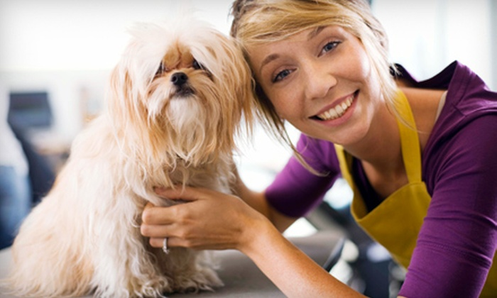 Meriden Animal Hospital - Meriden: Annual Exam, Vaccination Packages, or Acupuncture and Chiropractic Exam at Meriden Animal Hospital