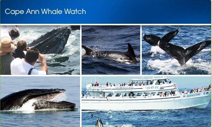 A Cape Ann Whale Watch - Gloucester: $20 Ticket to Cape Ann Whale Watch ($45 Value)