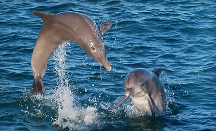 1 Child Ticket for Ages 4-12 to a 2-Hour Sunset Dolphin Cruise (a $15 value) - Olin Marler's Charter Fishing & Dolphin Cruises in Destin