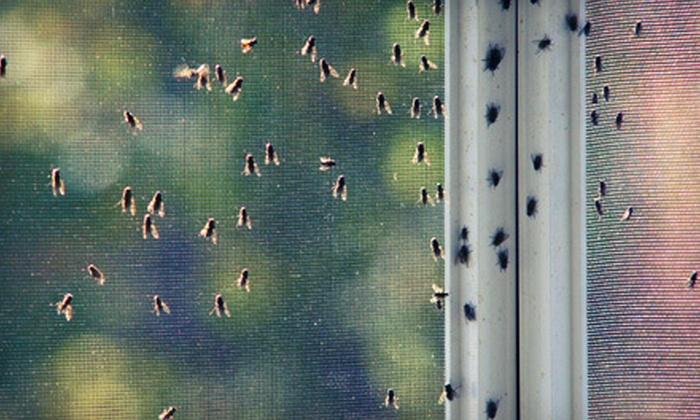Missouri Pest Control - Barnhart: Exterior Pest Control or Pest Control with Ant Spray from Missouri Maid Service and Pest Control (51% Off)