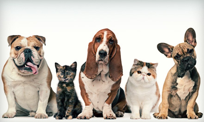 Animal Medical Center of Redlands - Downtown Redlands: Two Days and Three Nights of Pet Boarding at Animal Medical Center of Redlands (Up to 55% Off). Five Options Available.