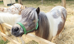 Essex Horse and Pony Protection Society: Essex Horse and Pony Protection Society: Family Entry With Refreshments